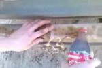 Kinh ngạc xem làm sạch bóng thanh sắt gỉ sét bằng... Coca Cola