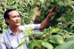 Thành tỷ phú từ trồng cây phúc bồn tử