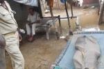 Ấn Độ: Hai anh trai chặt đầu em gái rồi diễu phố gây rúng động