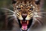 Ngụy trang khám phá Châu Phi hoang dã