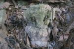 Chiếc sọ linh thiêng trong ngôi miếu ở bản Xuồng