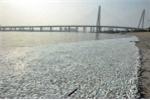 Hãi hùng những vụ cá chết hàng loạt vì ô nhiễm ở Trung Quốc