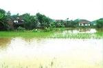 Thiệt hại do mưa lũ miền Trung hơn 1.000 tỷ đồng