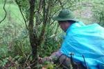 'Người rừng' đỉnh Fansipan đánh bại ung thư thế nào?