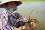 Nam Định: Thiệt hại nặng nề do bão số 2