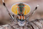 10 loài nhện độc nhất vô nhị trên hành tinh