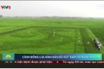 Clip: Chiêm ngưỡng bản đồ Việt Nam khổng lồ trên cánh đồng lúa ở Nghệ An