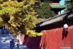 Ảnh: Cảnh sắc thu tuyệt đẹp ở chùa Thiếu Lâm