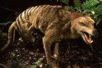 Bí ẩn kỳ lạ về loài vật 'chó lai hổ' vô cùng hung dữ