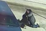 Clip: Ông già dùng kungfu hạ gục chó ngao Tây Tạng 70kg