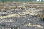 Năm 2013 sẽ hoàn thành tẩy độc Dioxin tại Đà Nẵng