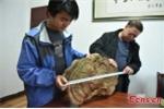 Phát hiện nấm linh chi 100 năm tuổi to như cái mâm