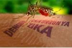 Chủ động phòng chống virus gây teo não Zika