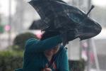 Video: Siêu bão Dujuan đổ bộ Đài Loan, hàng chục người thương vong