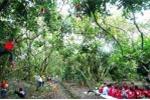 Xanh mướt vườn trái cây Vàm Xáng