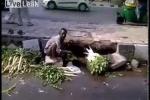 Clip: Kinh hãi cảnh rửa rau bằng nước cống ngay ven đường