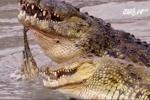 Hy hữu: 3 con cá sấu sông Nile ăn thịt người đột nhiên xuất hiện ở Mỹ