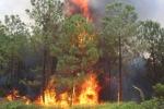 Hàng trăm bộ đội dập cháy rừng gần kho quân sự