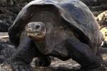 """""""George cô đơn"""" chết, rùa khổng lồ tuyệt chủng"""
