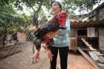 3 triệu đồng 1kg thịt gà ăn Tết