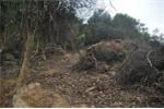 Vụ phá rừng ở Sơn Trà: Kiểm điểm cán bộ kiểm lâm sai phạm