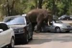Thất tình, voi đực húc nát gần 20 chiếc ô tô