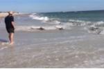 Clip: Hãi hùng cảnh hàng trăm con cá mập kéo lên bờ biển kiếm ăn