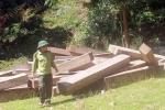 Khởi tố vụ phá rừng có dấu hiệu kiểm lâm bảo kê lâm tặc