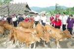 Trao tặng 60 con bò cho Hội Chữ Thập Đỏ Việt Nam