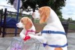 Clip: Chó mẹ dẫn con đi chơi công viên như người
