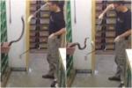 Clip: Sởn gai ốc với công việc nguy hiểm nhất thế giới ít ai dám làm