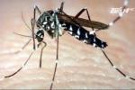 Cảnh báo virus ăn não do muỗi truyền tấn công Việt Nam