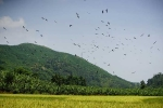 Tận mắt thấy hàng trăm con chim lạ xuất hiện ở Lào Cai