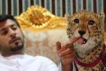 Thú vui xa xỉ bất chấp nỗi sợ hãi của nhà giàu Trung Đông