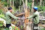 Bắt băng nhóm xã hội đen mang súng chặt phá rừng