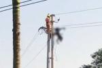Sửa chữa đường điện cao thế, một nhân viên bị điện giật chết cháy