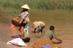 Xót xa cảnh nông dân Hà Tĩnh gặt lúa về cho gà, vịt ăn
