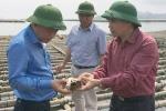 Vì sao hàng ngàn tấn hàu bị chết tại Quảng Ninh?