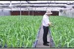 Ứng dụng vật liệu mới vào nông nghiệp công nghệ cao