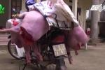 Bắt quả tang kẻ tẩu tán lợn chết bầm tím cho các nhà hàng