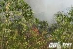 Đang cháy lớn rừng thông ở Quảng Ninh
