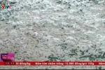 Bắt quả tang cơ sở sử dụng chất tẩy rửa công nghiệp chế biến cá cơm