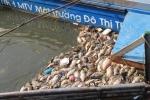 Video: Cá chết trắng kênh Nhiêu Lộc, công nhân môi trường vớt không xuể