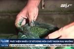 Rợn người chứng kiến cảnh dùng hóa chất ngâm rau muống