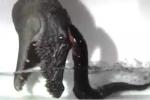 Clip: Lươn điện hung hãn chích điện tiêu diệt 'kẻ thù'