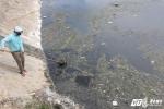 Tìm ra nguyên nhân cá chết hàng loạt ở Đà Nẵng