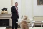 Ông Putin dỗ chó cưng trong cuộc phỏng vấn với truyền thông Nhật Bản