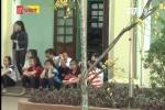 Yêu cầu chặt bỏ ngay cây, hoa chứa chất độc trong trường học