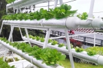 Ứng dụng công nghệ điện toán đám mây để trồng rau sạch