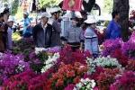 30 Tết: Chợ hoa Sài thành đại hạ giá, người dân đổ xô sắm Tết